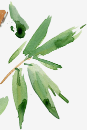 bg_homeopaat-linkspalmtekening